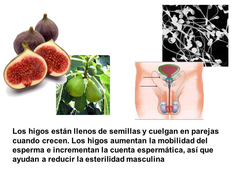 Los higos están llenos de semillas y cuelgan en parejas cuando crecen. Los higos aumentan la mobilidad del esperma e incrementan la cuenta espermática