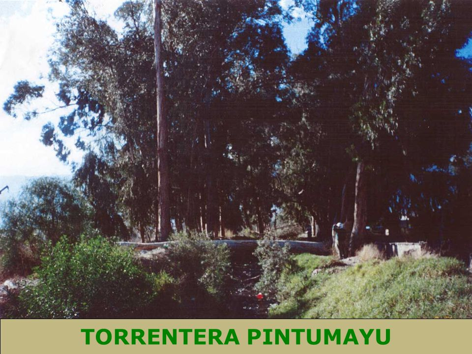 TORRENTERA PINTUMAYU