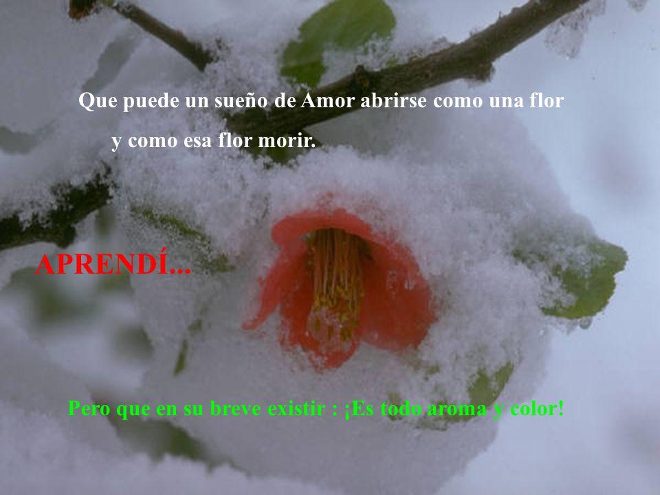 APRENDÍ... Pero que en su breve existir : ¡Es todo aroma y color! Que puede un sueño de Amor abrirse como una flor y como esa flor morir.