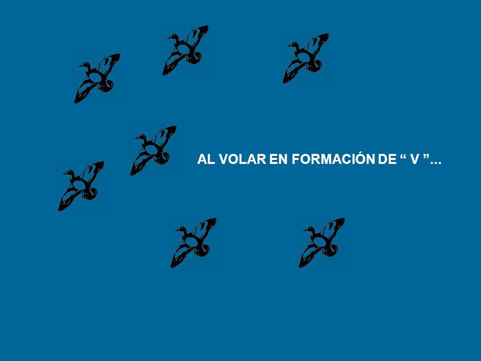 AL VOLAR EN FORMACIÓN DE V...