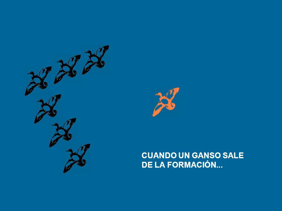 Y DEBE SALIR DE LA FORMACIÓN