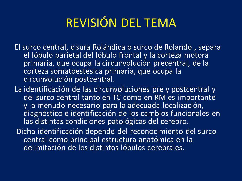 REVISIÓN DEL TEMA El surco central, cisura Rolándica o surco de Rolando, separa el lóbulo parietal del lóbulo frontal y la corteza motora primaria, que ocupa la circunvolución precentral, de la corteza somatoestésica primaria, que ocupa la circunvolución postcentral.