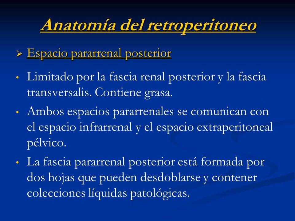 Anatomía del retroperitoneo Espacio pararrenal posterior Espacio pararrenal posterior Limitado por la fascia renal posterior y la fascia transversalis