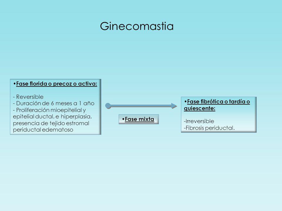 Ginecomastia Fase florida o precoz o activa: - Reversible - Duración de 6 meses a 1 año - Proliferación mioepitelial y epitelial ductal, e hiperplasia, presencia de tejido estromal periductal edematoso Fase fibrótica o tardía o quiescente: -Irreversible -Fibrosis periductal.