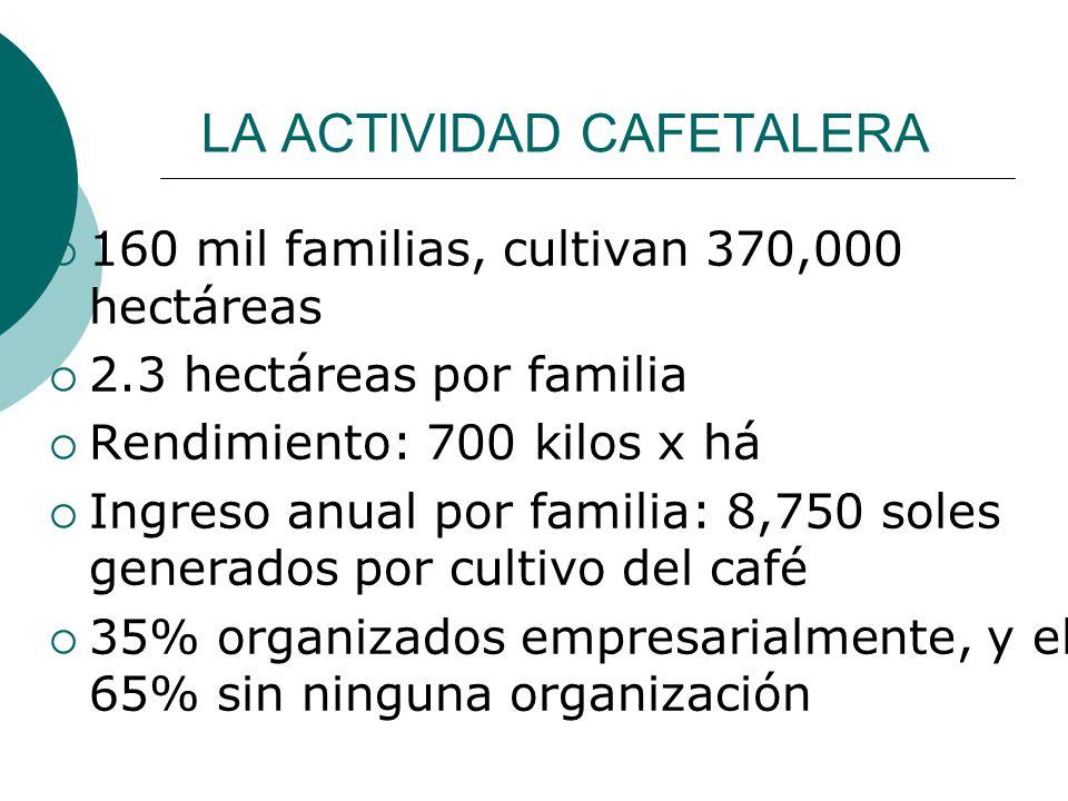 LA ACTIVIDAD CAFETALERA 160 mil familias, cultivan 370,000 hectáreas 2.3 hectáreas por familia Rendimiento: 700 kilos x há Ingreso anual por familia: 8,750 soles generados por cultivo del café 35% organizados empresarialmente, y el 65% sin ninguna organización