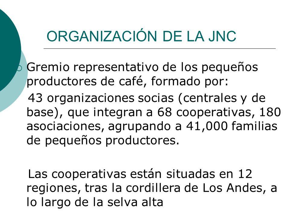 ORGANIZACIÓN DE LA JNC Gremio representativo de los pequeños productores de café, formado por: 43 organizaciones socias (centrales y de base), que integran a 68 cooperativas, 180 asociaciones, agrupando a 41,000 familias de pequeños productores.