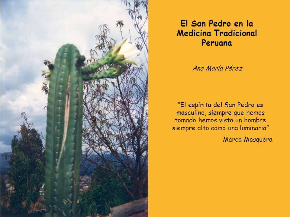 El San Pedro en la Medicina Tradicional Peruana Ana María Pérez El espíritu del San Pedro es masculino, siempre que hemos tomado hemos visto un hombre