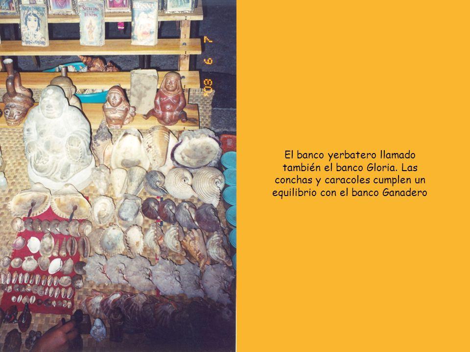 El banco yerbatero llamado también el banco Gloria. Las conchas y caracoles cumplen un equilibrio con el banco Ganadero