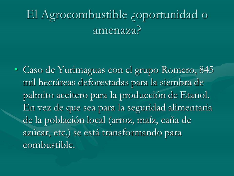 El Agrocombustible ¿oportunidad o amenaza? Caso de Yurimaguas con el grupo Romero, 845 mil hectáreas deforestadas para la siembra de palmito aceitero