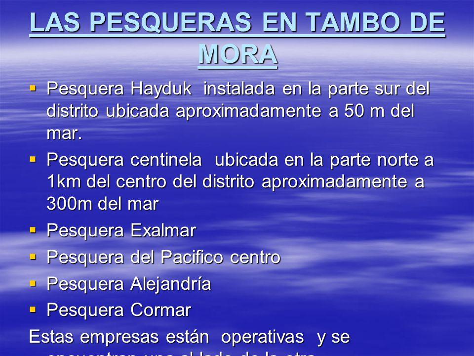 LAS PESQUERAS EN TAMBO DE MORA Pesquera Hayduk instalada en la parte sur del distrito ubicada aproximadamente a 50 m del mar. Pesquera Hayduk instalad