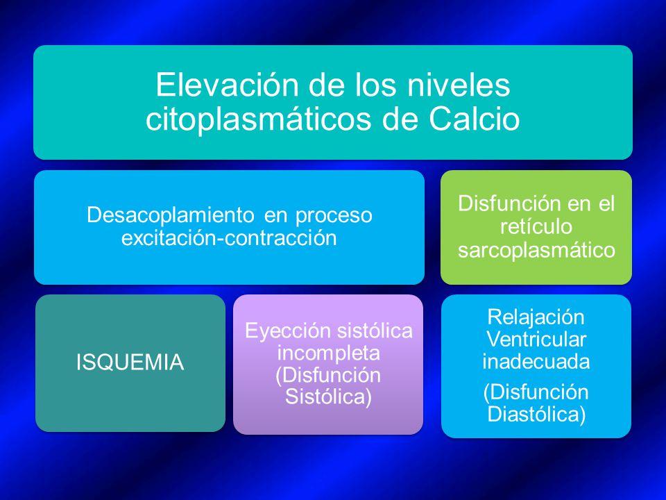 Elevación de los niveles citoplasmáticos de Calcio Desacoplamiento en proceso excitación-contracción ISQUEMIA Eyección sistólica incompleta (Disfunció