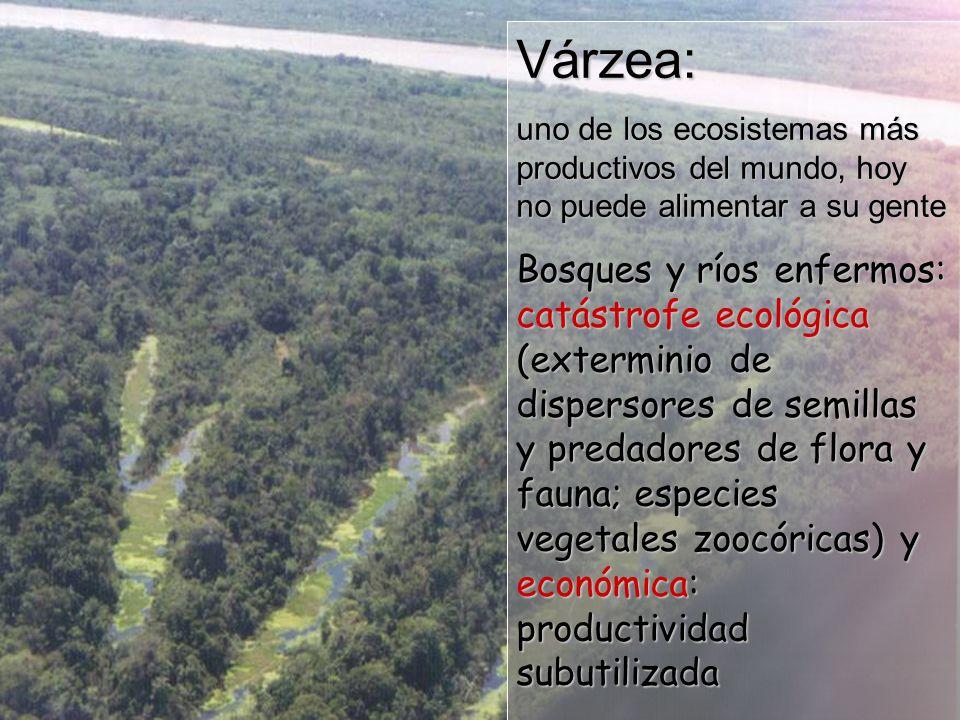 Várzea: uno de los ecosistemas más productivos del mundo, hoy no puede alimentar a su gente Bosques y ríos enfermos: catástrofe ecológica (exterminio