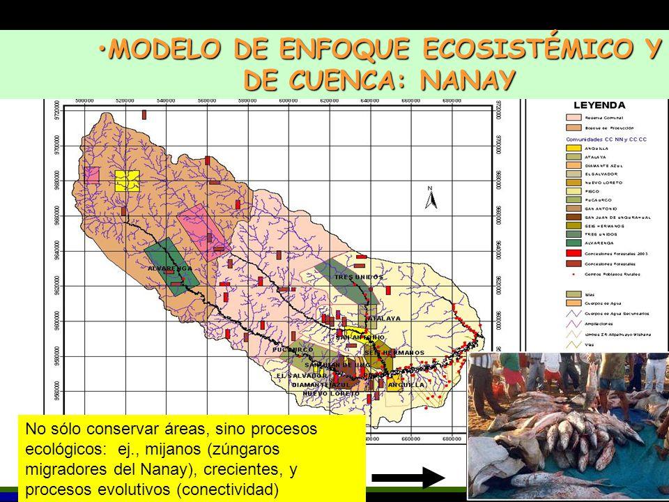 MODELO DE ENFOQUE ECOSISTÉMICO Y DE CUENCA: NANAYMODELO DE ENFOQUE ECOSISTÉMICO Y DE CUENCA: NANAY No sólo conservar áreas, sino procesos ecológicos: