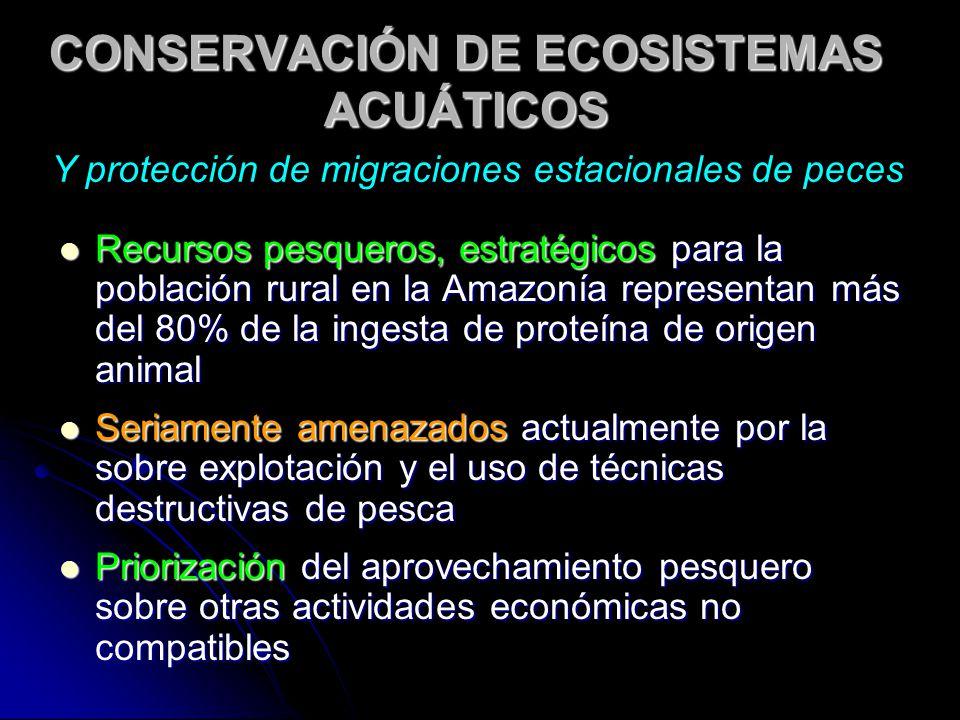 CONSERVACIÓN DE ECOSISTEMAS ACUÁTICOS Recursos pesqueros, estratégicos para la población rural en la Amazonía representan más del 80% de la ingesta de