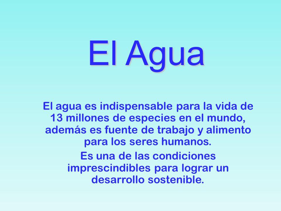 El Agua El Agua El agua es indispensable para la vida de 13 millones de especies en el mundo, además es fuente de trabajo y alimento para los seres humanos.