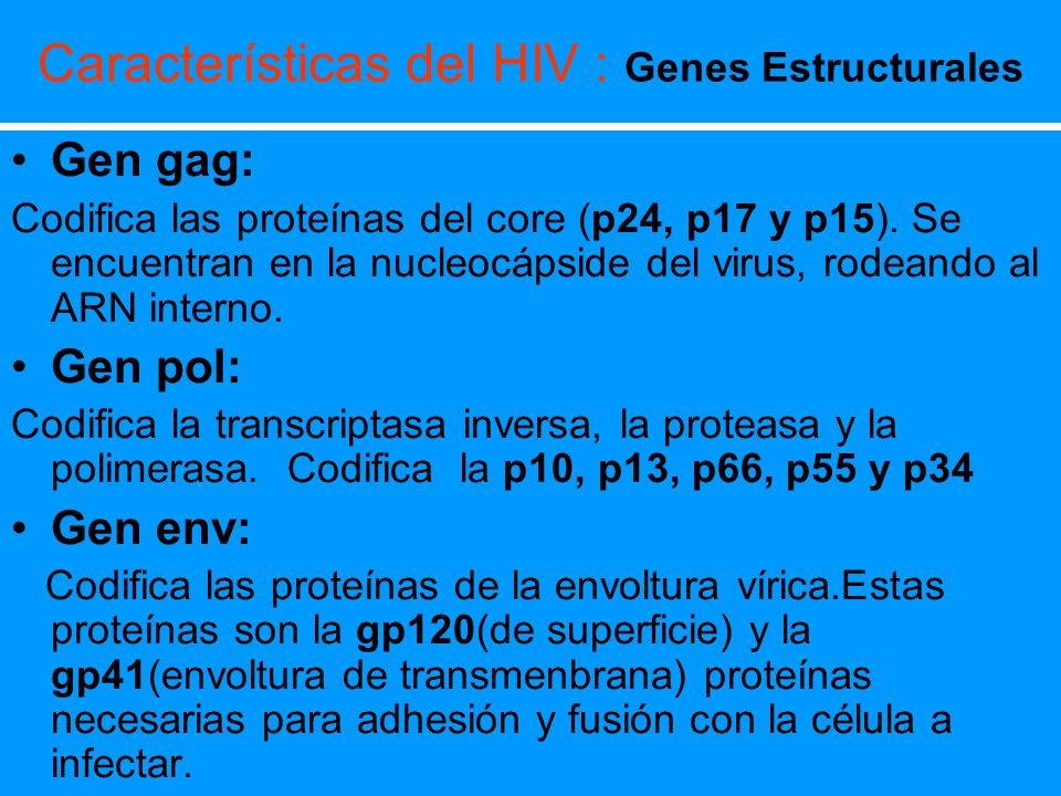 Características del HIV : Genes Estructurales Gen gag: Codifica las proteínas del core (p24, p17 y p15). Se encuentran en la nucleocápside del virus,