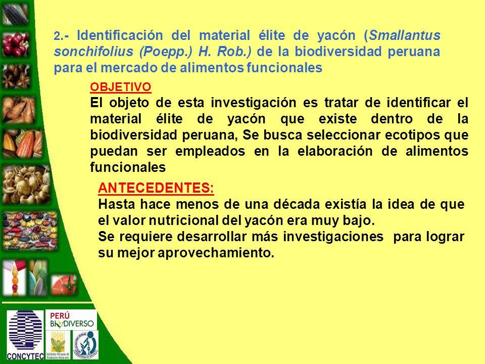 2.- Identificación del material élite de yacón (Smallantus sonchifolius (Poepp.) H.