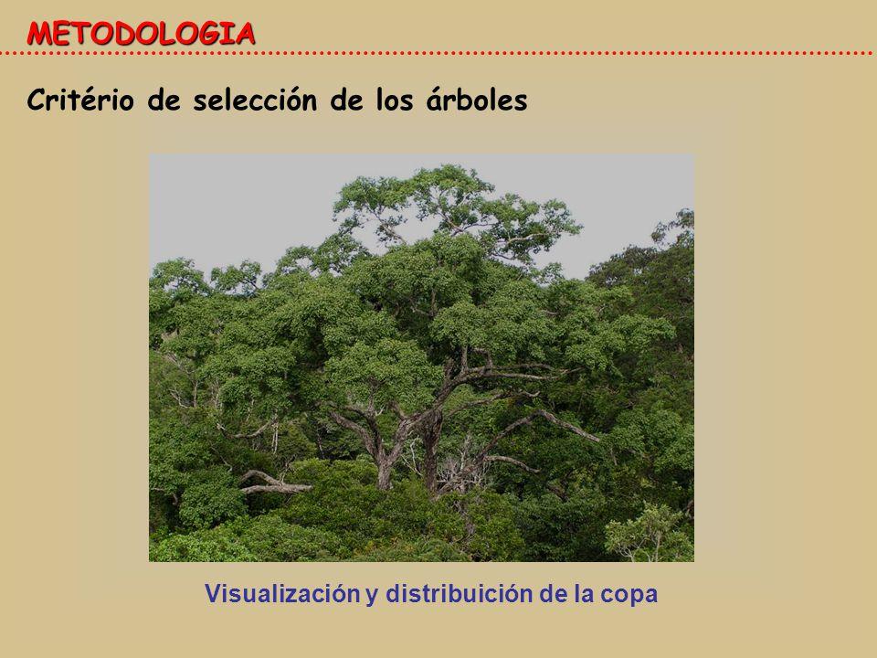 Critério de selección de los árboles METODOLOGIA Visualización y distribuición de la copa