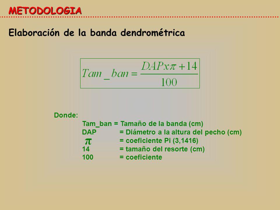 Elaboración de la banda dendrométrica METODOLOGIA Donde: Tam_ban = Tamaño de la banda (cm) DAP = Diámetro a la altura del pecho (cm) = coeficiente Pi (3,1416) 14 = tamaño del resorte (cm) 100 = coeficiente