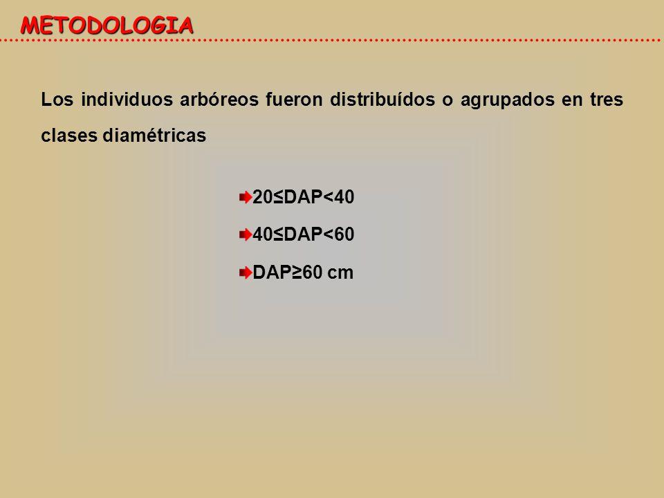 METODOLOGIA 20DAP<40 40DAP<60 DAP60 cm Los individuos arbóreos fueron distribuídos o agrupados en tres clases diamétricas
