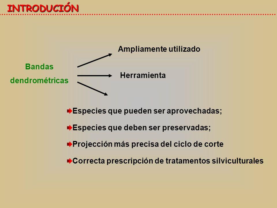 Especies que pueden ser aprovechadas; Especies que deben ser preservadas; Projección más precisa del ciclo de corte Correcta prescripción de tratamentos silviculturales Bandas dendrométricas Herramienta INTRODUCIÓN Ampliamente utilizado