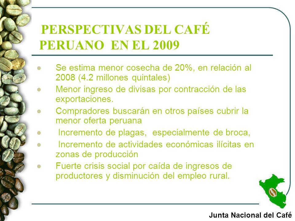 PERSPECTIVAS DEL CAFÉ PERUANO EN EL 2009 Se estima menor cosecha de 20%, en relación al 2008 (4.2 millones quintales) Menor ingreso de divisas por con