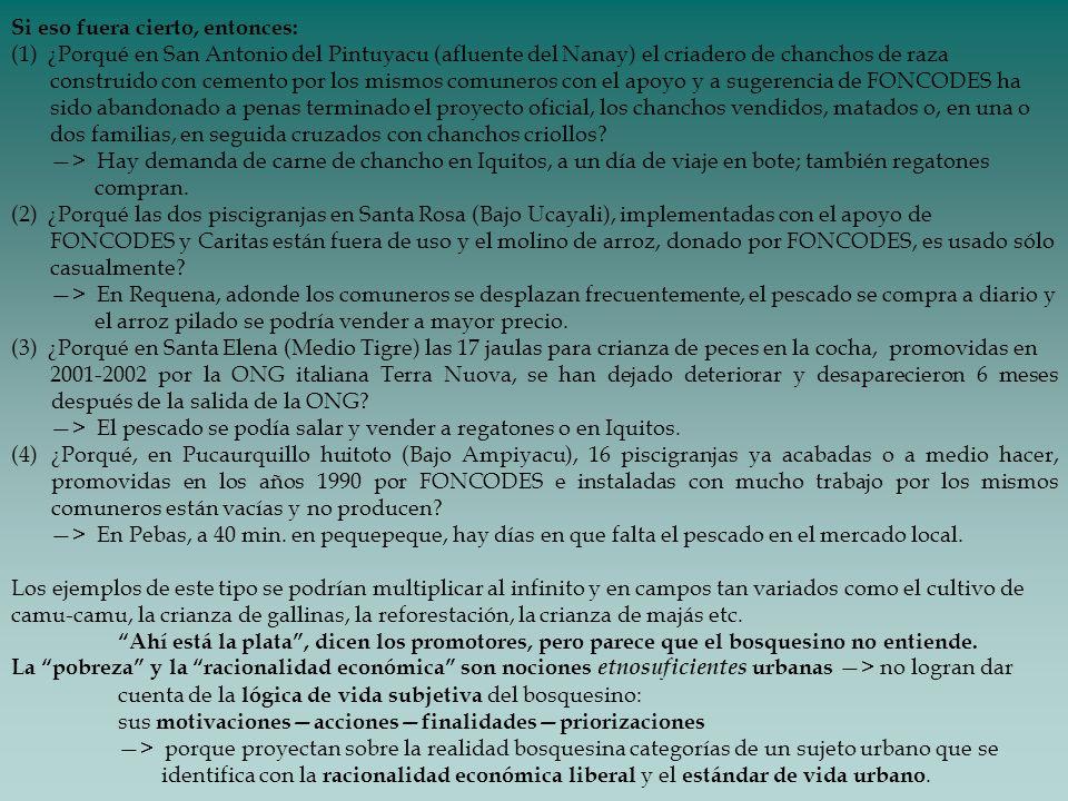 Si eso fuera cierto, entonces: (1) ¿Porqué en San Antonio del Pintuyacu (afluente del Nanay) el criadero de chanchos de raza construido con cemento po