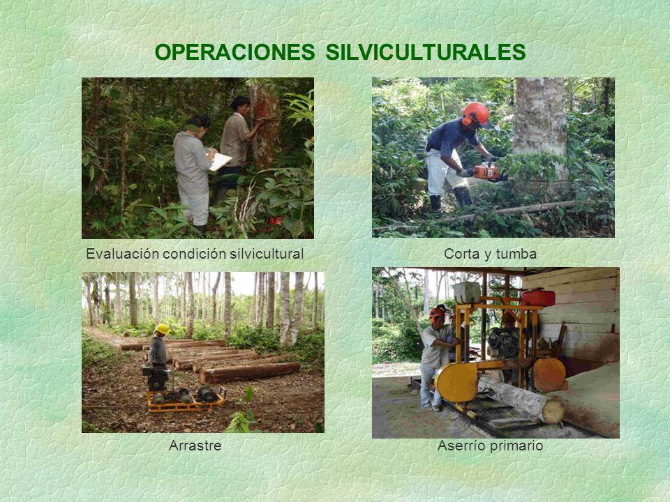 OPERACIONES SILVICULTURALES Evaluación condición silviculturalCorta y tumba ArrastreAserrío primario