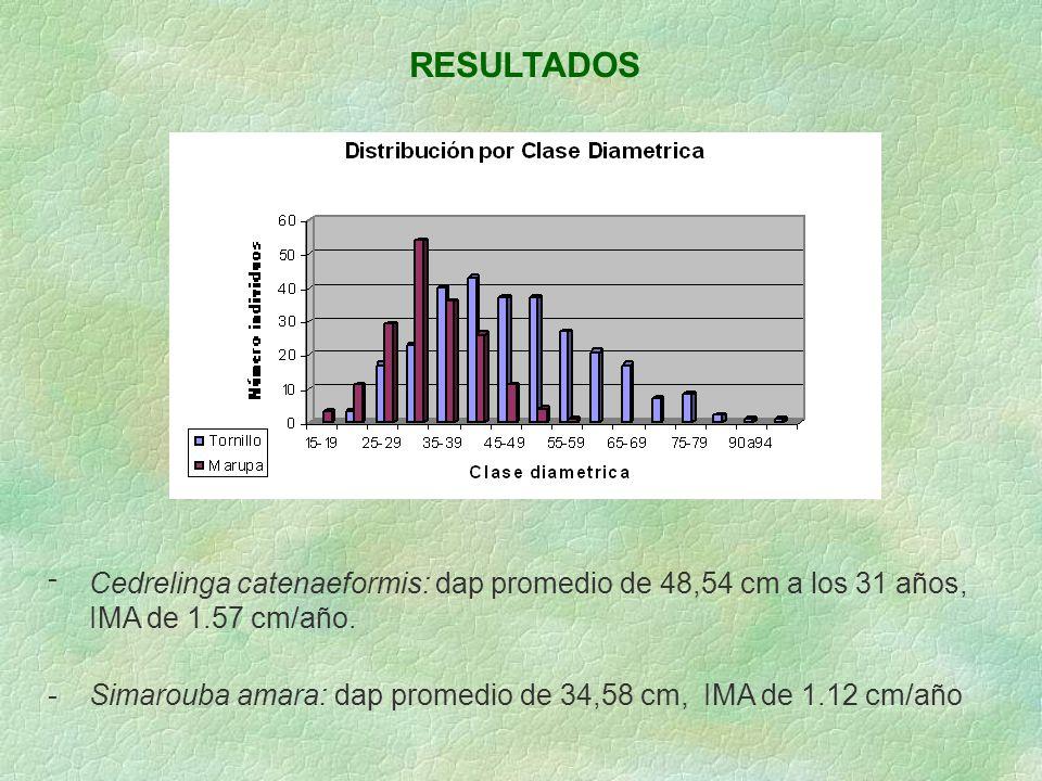 RESULTADOS - Cedrelinga catenaeformis: dap promedio de 48,54 cm a los 31 años, IMA de 1.57 cm/año. -Simarouba amara: dap promedio de 34,58 cm, IMA de