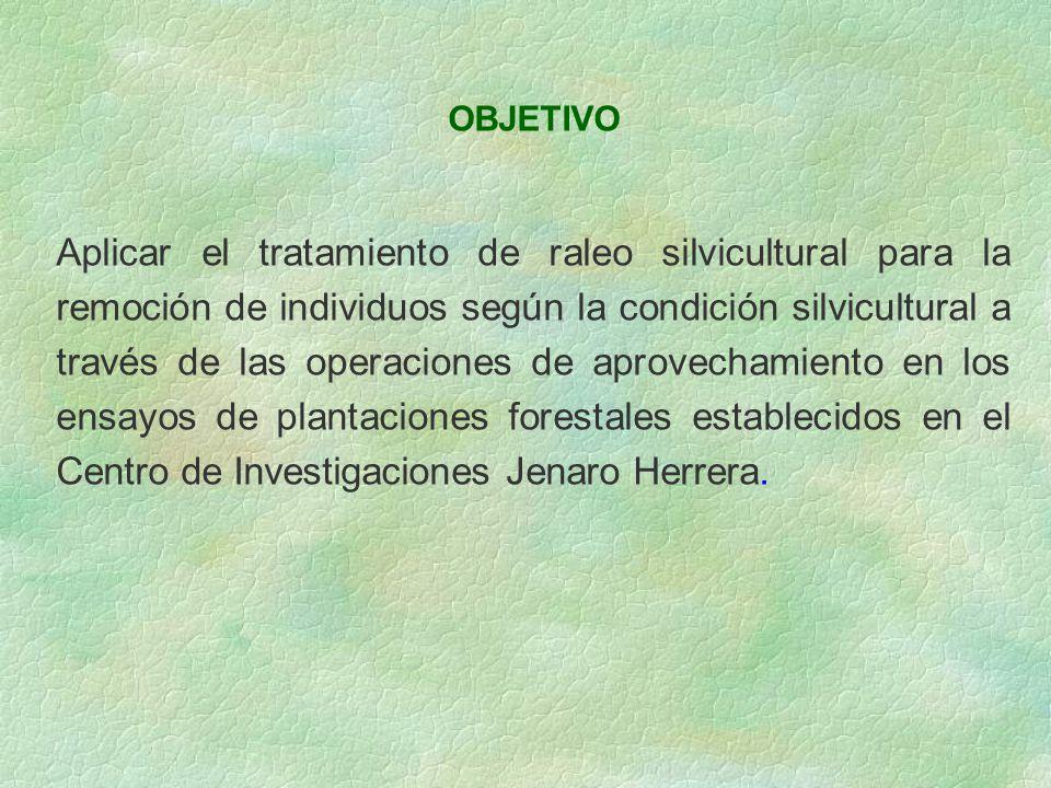 OBJETIVO Aplicar el tratamiento de raleo silvicultural para la remoción de individuos según la condición silvicultural a través de las operaciones de