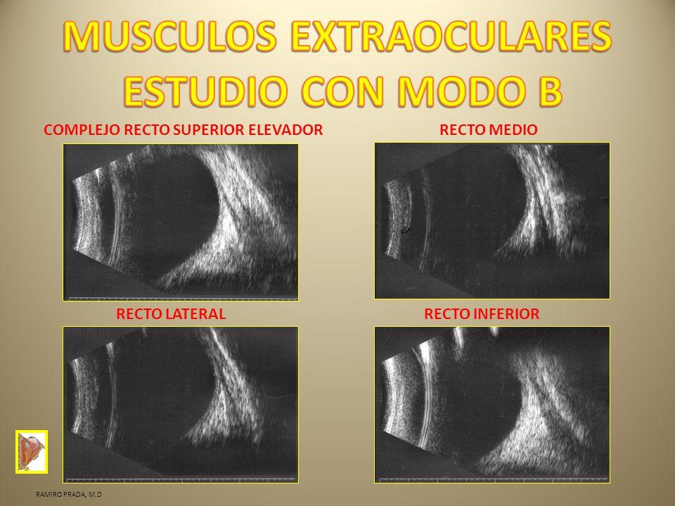 COMPLEJO RECTO SUPERIOR ELEVADORRECTO MEDIO RECTO LATERALRECTO INFERIOR RAMIRO PRADA, M.D