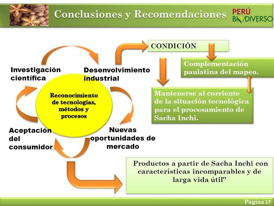 Conclusiones y Recomendaciones Página 17 Investigación científica Aceptación del consumidor Desenvolvimiento industrial Nuevas oportunidades de mercad