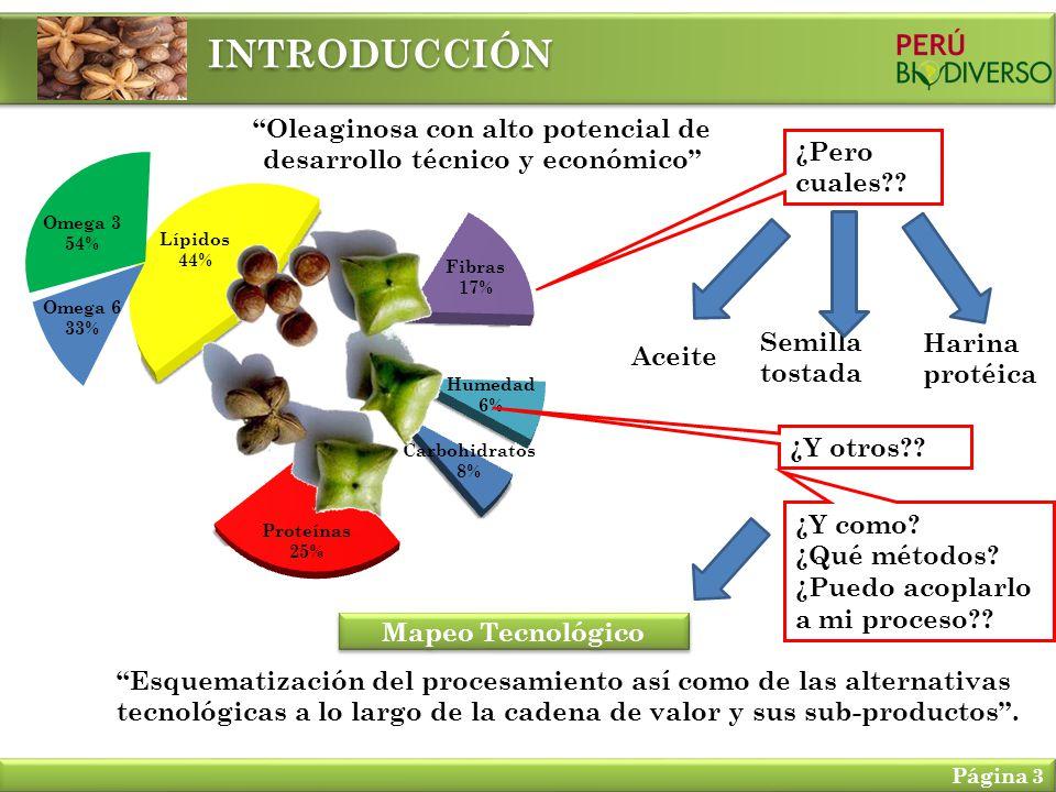 INTRODUCCIÓN Página 3 Oleaginosa con alto potencial de desarrollo técnico y económico Omega 3 54% Omega 6 33% ¿Pero cuales?? Aceite Semilla tostada Ha