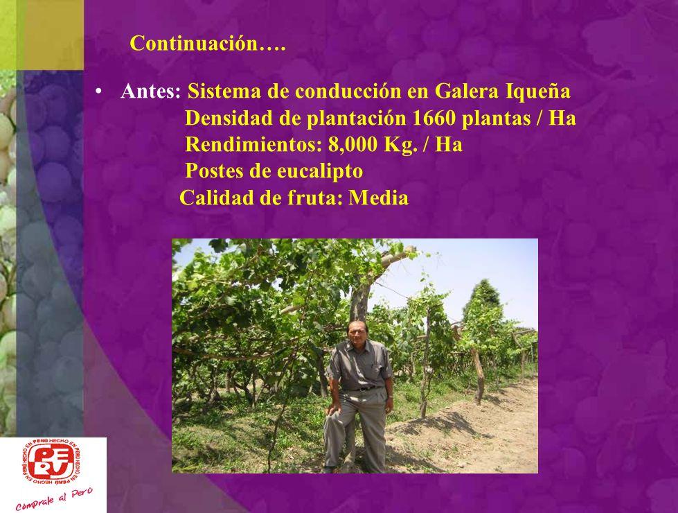Caso Nº 2: Promoviendo Tecnología Agricultor: Armando Alva Urbizagastegui Fundo: Monte Cachiche Ubicación: La Poruma – Distrito Cachiche -Ica Objetivo