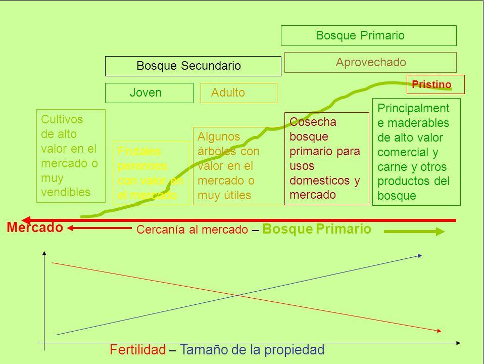 Mercado Cercanía al mercado – Bosque Primario Fertilidad – Tamaño de la propiedad Cultivos de alto valor en el mercado o muy vendibles Frutales perenn