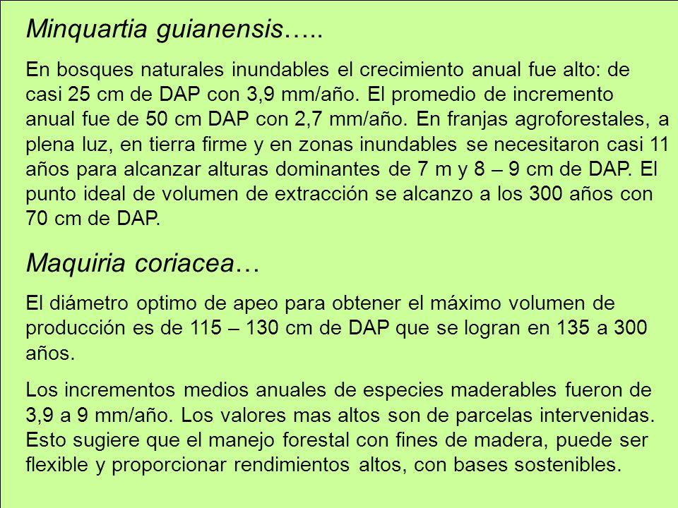 Minquartia guianensis….. En bosques naturales inundables el crecimiento anual fue alto: de casi 25 cm de DAP con 3,9 mm/año. El promedio de incremento