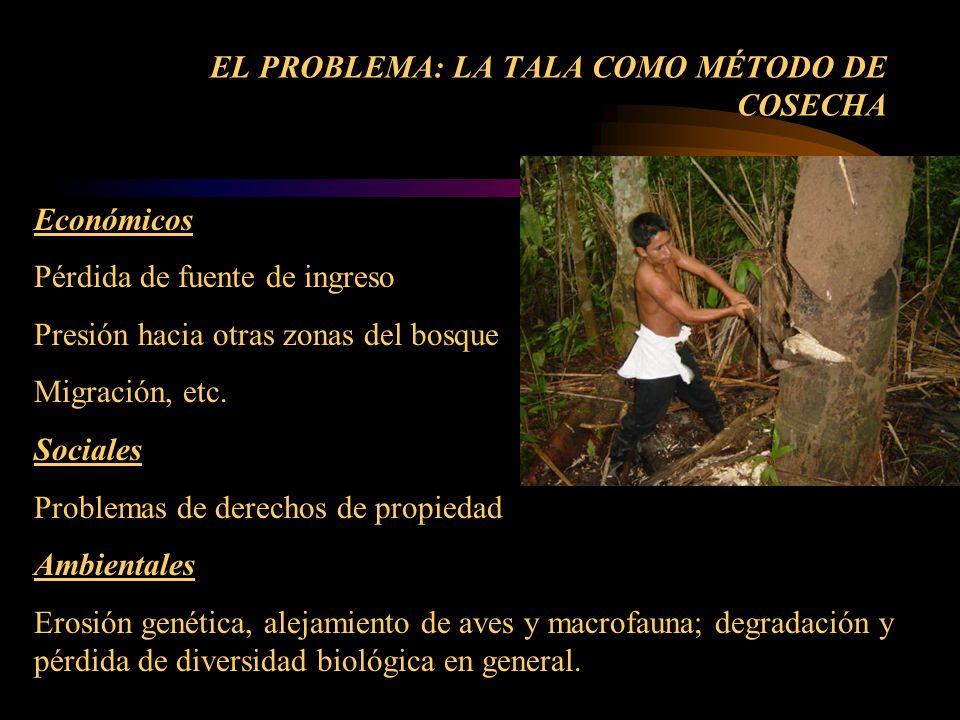 EL PROBLEMA: LA TALA COMO MÉTODO DE COSECHA Económicos Pérdida de fuente de ingreso Presión hacia otras zonas del bosque Migración, etc. Sociales Prob