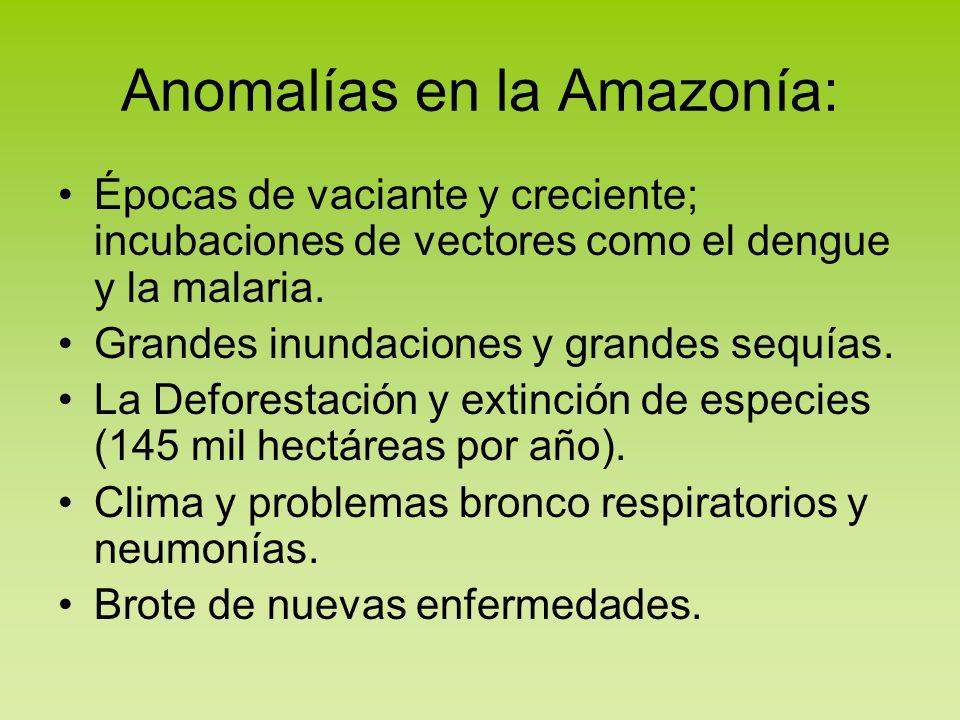 Anomalías en la Amazonía: Épocas de vaciante y creciente; incubaciones de vectores como el dengue y la malaria. Grandes inundaciones y grandes sequías