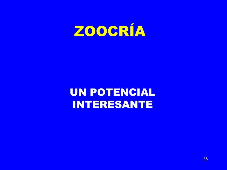 28 ZOOCRÍA UN POTENCIAL INTERESANTE