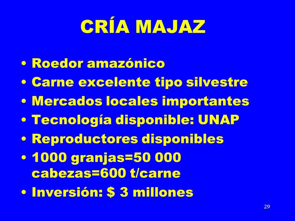 29 CRÍA MAJAZ Roedor amazónico Carne excelente tipo silvestre Mercados locales importantes Tecnología disponible: UNAP Reproductores disponibles 1000