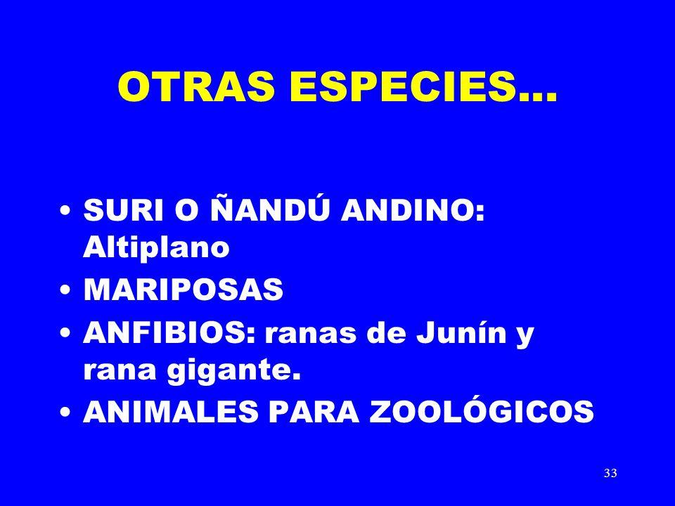 33 OTRAS ESPECIES... SURI O ÑANDÚ ANDINO: Altiplano MARIPOSAS ANFIBIOS: ranas de Junín y rana gigante. ANIMALES PARA ZOOLÓGICOS