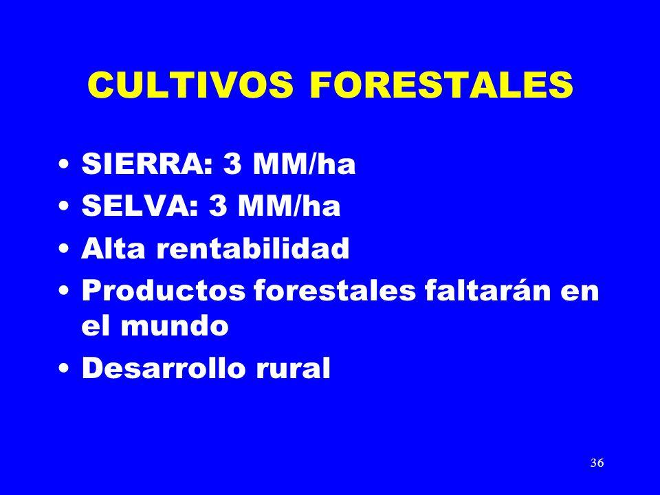 36 CULTIVOS FORESTALES SIERRA: 3 MM/ha SELVA: 3 MM/ha Alta rentabilidad Productos forestales faltarán en el mundo Desarrollo rural
