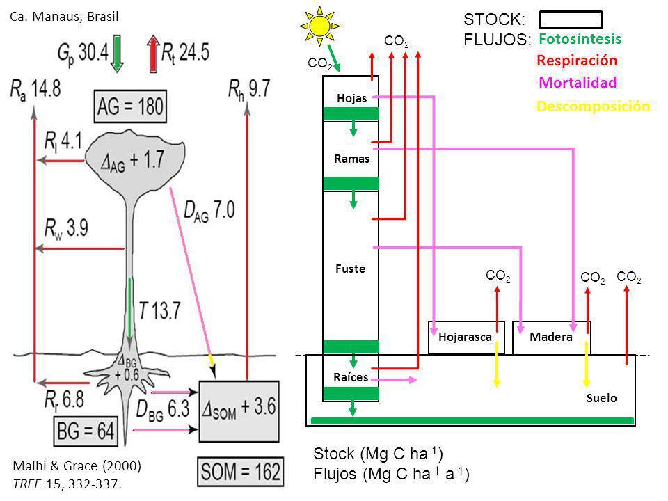 Stock = cantidad almacenada a)Biomasa viva (BV): hojas, ramas, fuste, raíces DAP: 10cm, 2.5-10 cm, < 2.5 cm b)Necromasa (N): hojarasca (hojas), madera muerta (ramas y fustes) DAP: 10cm, 2.5-10 cm, < 2.5 cm c)Suelos (S): materia orgánica del suelo Profundidad: 0-20cm, 20-30cm… STOCK TOTAL (Mg ha -1 ) = BV + N + S 50% de la biomasa seca es Carbono