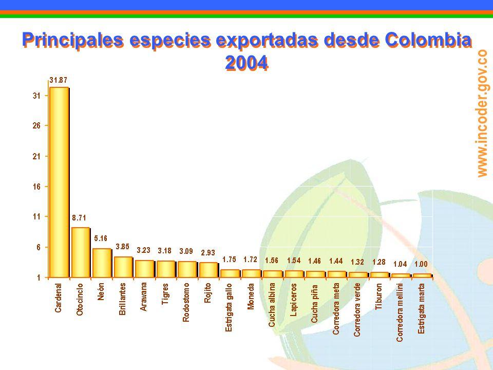 www.incoder.gov.co Principales especies exportadas desde Colombia 2004 Principales especies exportadas desde Colombia 2004