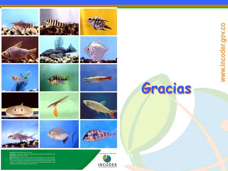 www.incoder.gov.co Gracias