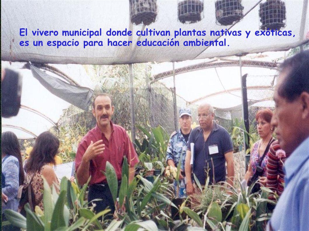 El vivero municipal donde cultivan plantas nativas y exóticas, es un espacio para hacer educación ambiental.