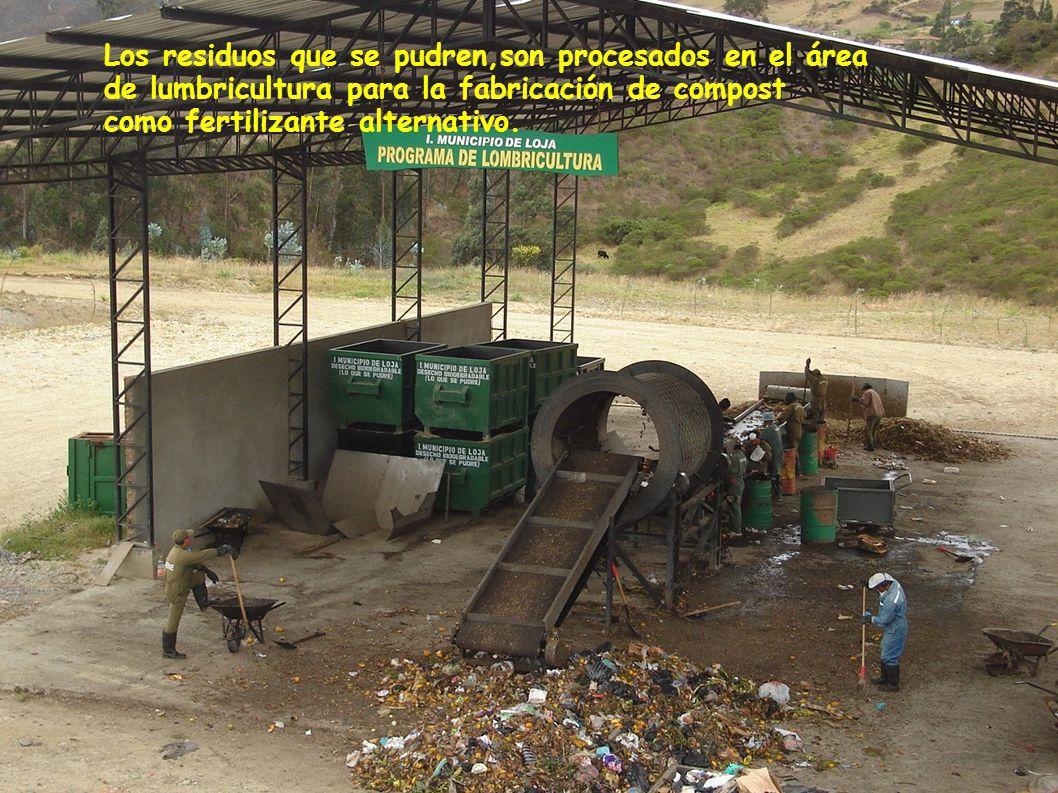 Los residuos que se pudren,son procesados en el área de lumbricultura para la fabricación de compost como fertilizante alternativo.