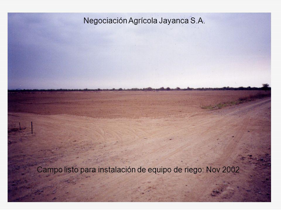 Campo listo para instalación de equipo de riego: Nov 2002 Negociación Agrícola Jayanca S.A.