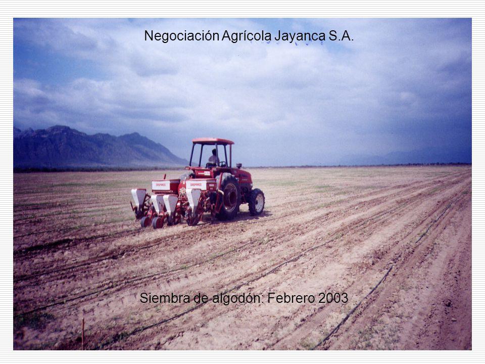 Siembra de algodón: Febrero 2003 Negociación Agrícola Jayanca S.A.
