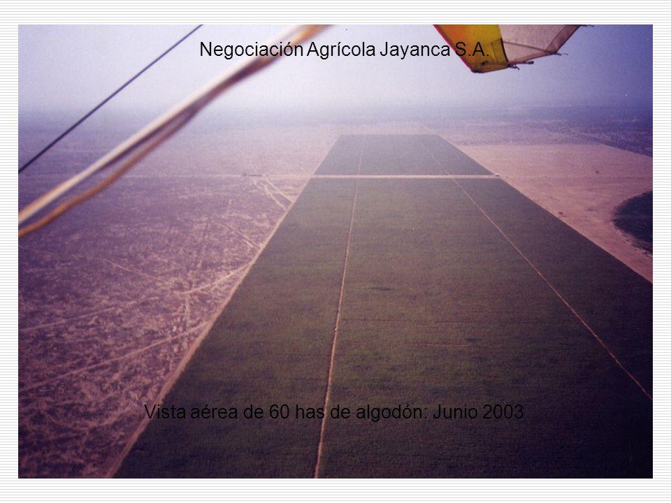Vista aérea de 60 has de algodón: Junio 2003 Negociación Agrícola Jayanca S.A.